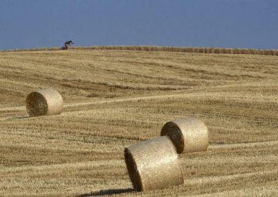Tuscan Landscape 3 by Ashok Mahindra, Italy