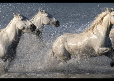 Don Johnson Running Horses